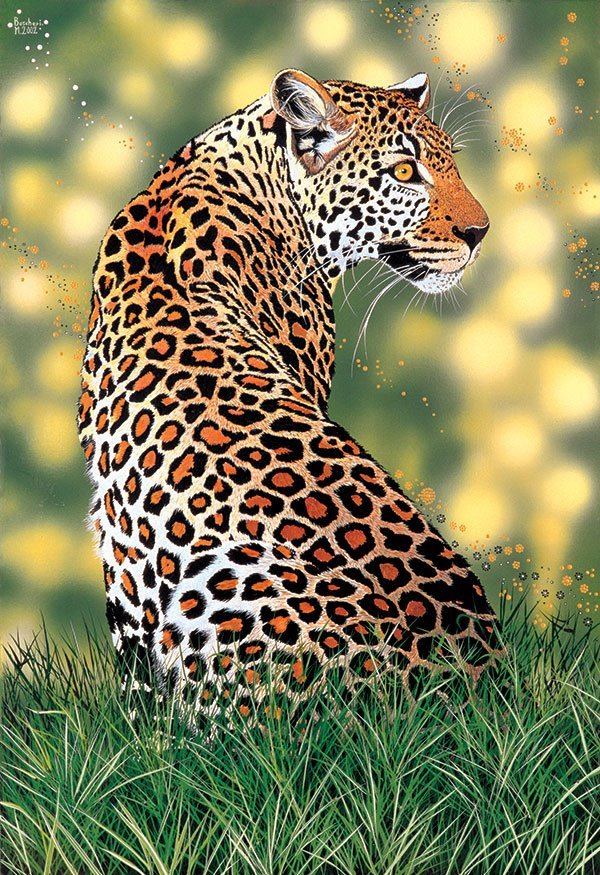 LEOPARDO IN LUCE